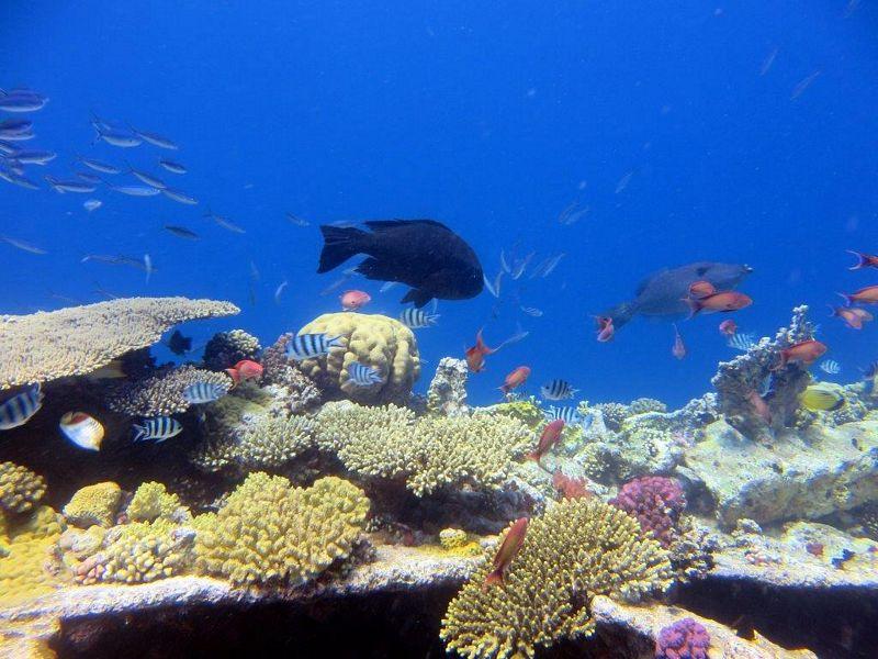 Safari Morze Czerwone