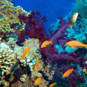 Red Sea_2