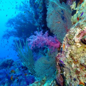 Red Sea_3