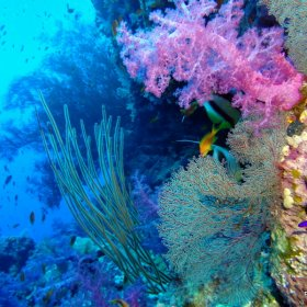 Red Sea_4