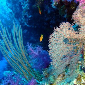 Red Sea_5