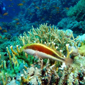 Red Sea_8