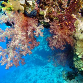 Red Sea_9