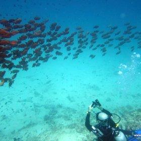 Malediwy nurkowy raj_1