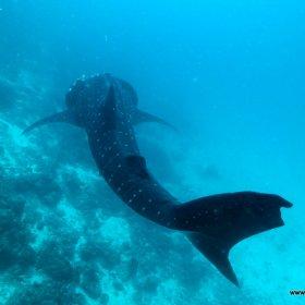 Malediwy nurkowy raj_2
